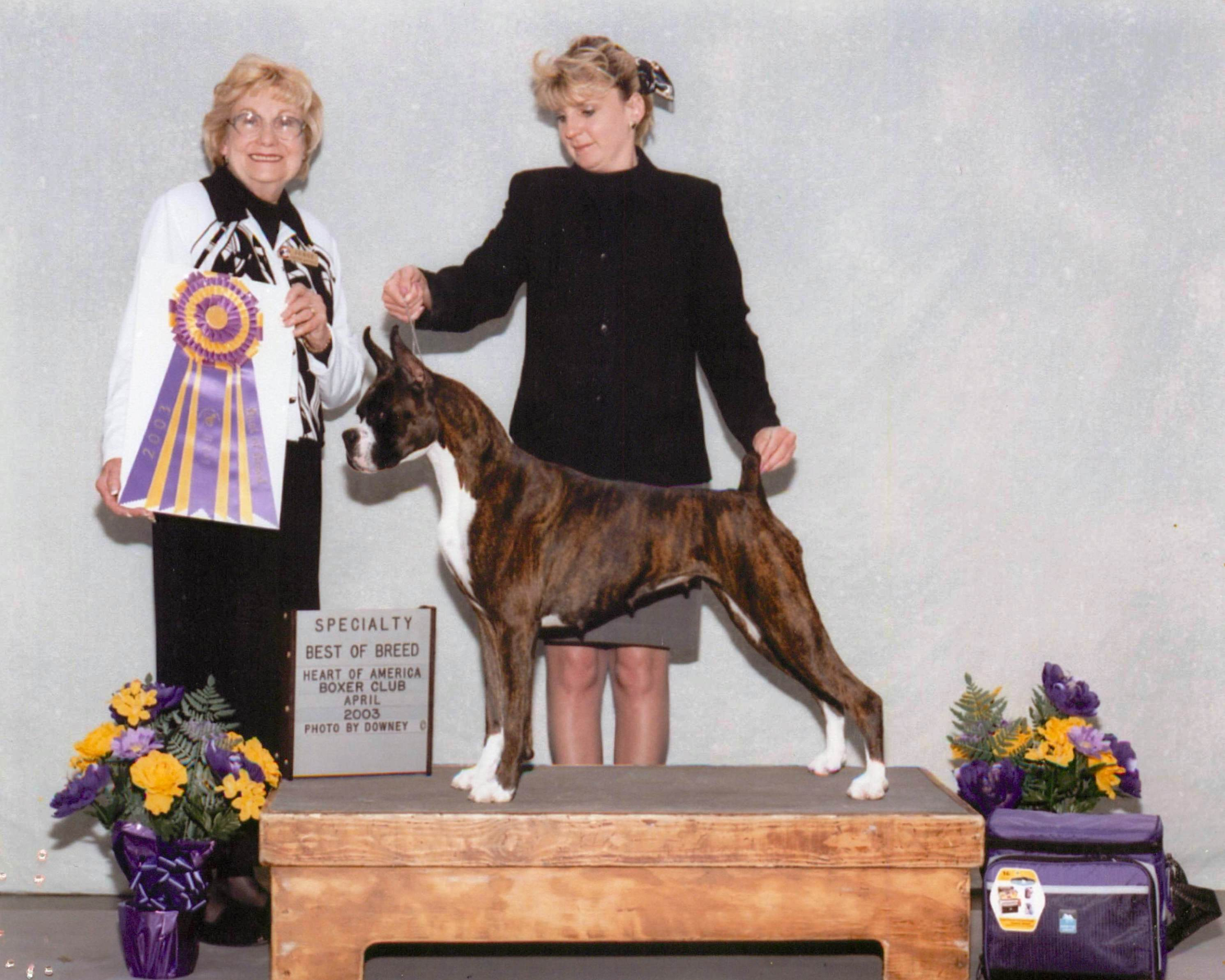 Best of Breed @ 2003 Specialty Show #1