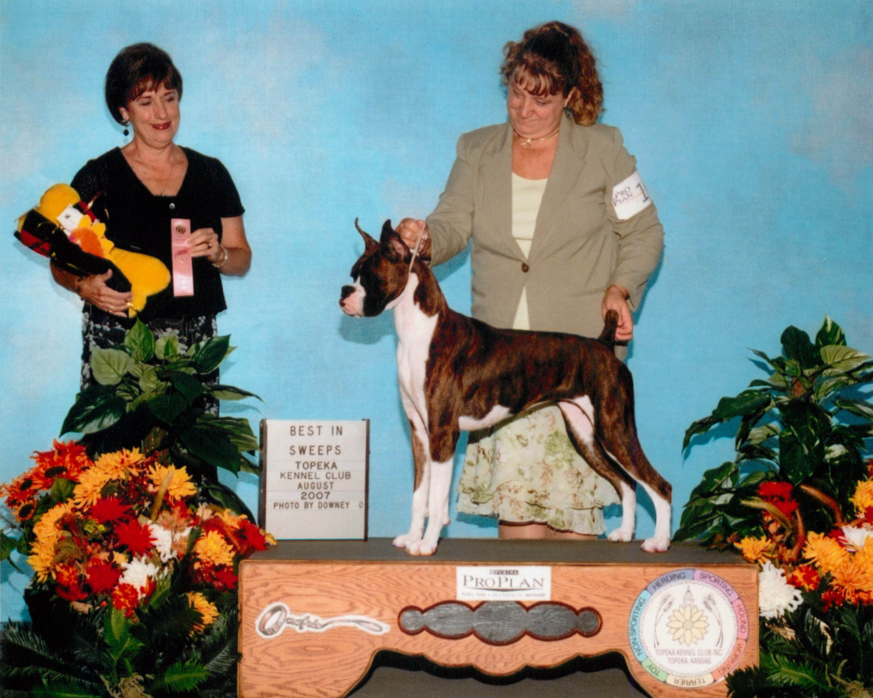 Grand Sweepstakes & Best Puppy @ 2007 Specialty Show #2