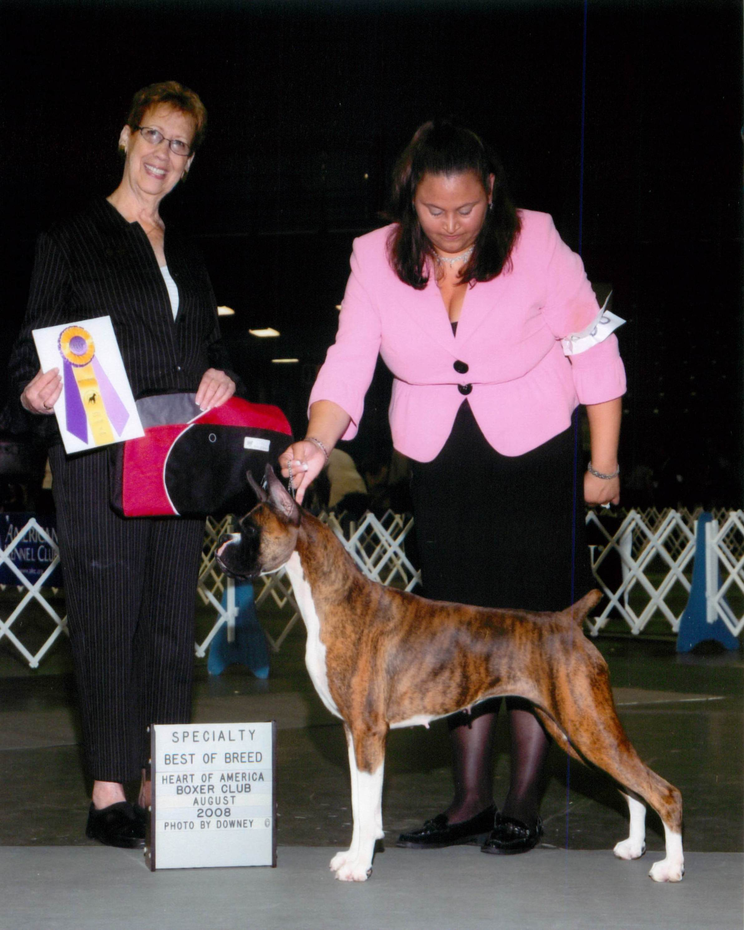 Best of Breed @ 2008 Specialty Show #1