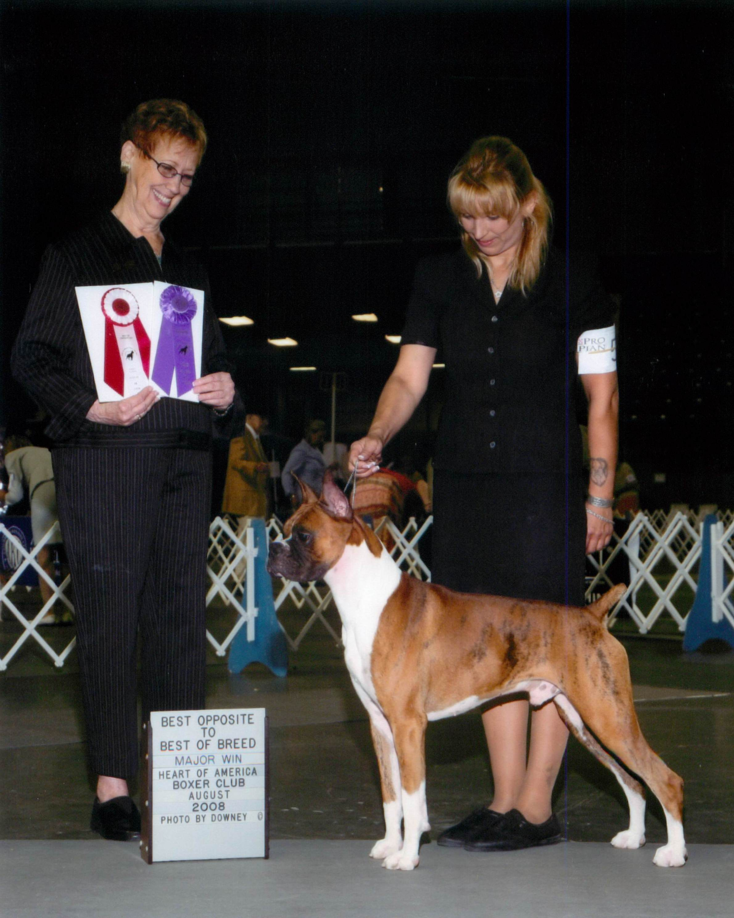 Winners Dog @ 2008 Specialty Show