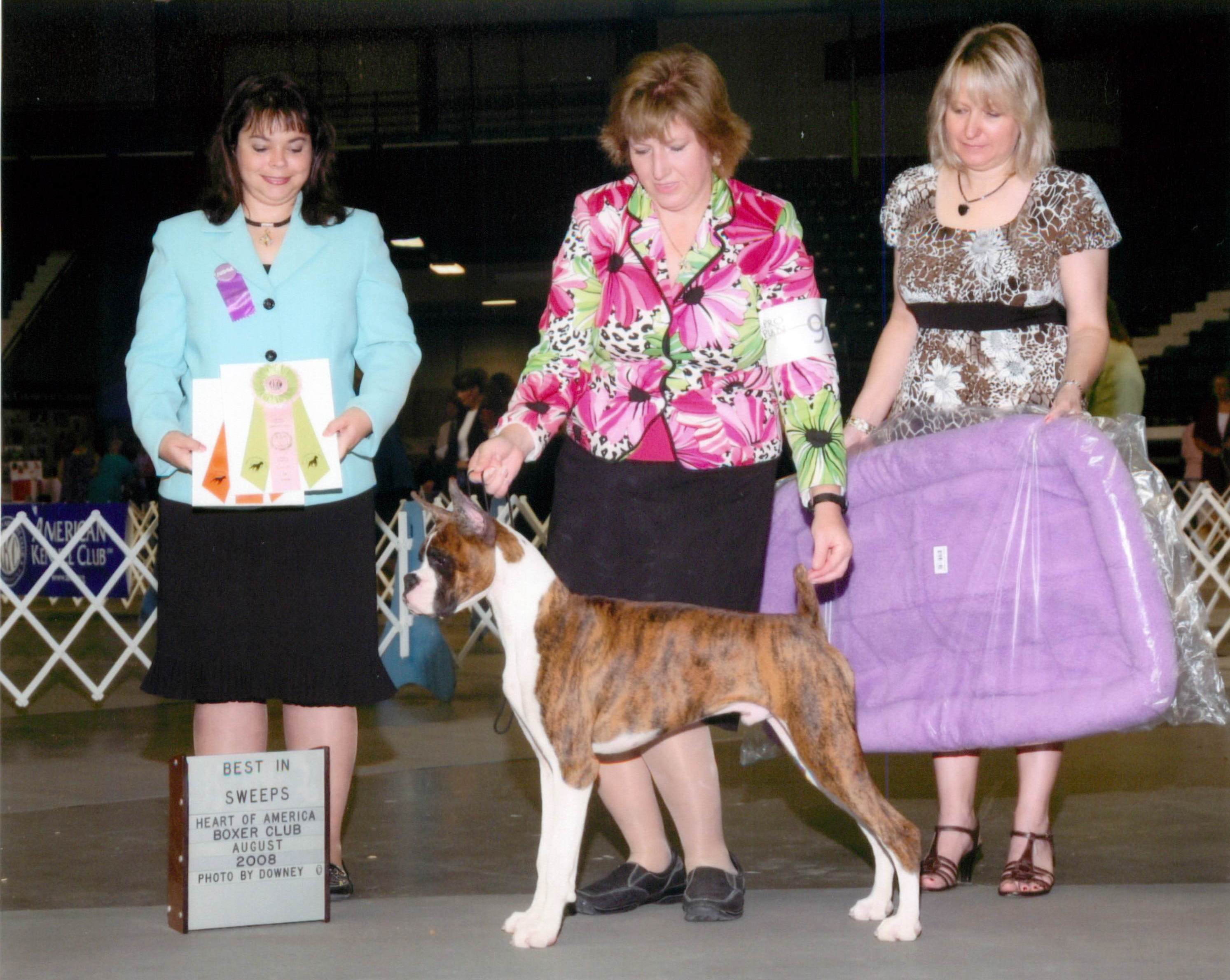 Grand Sweepstakes & Best Puppy @ 2008 Specialty Show #1