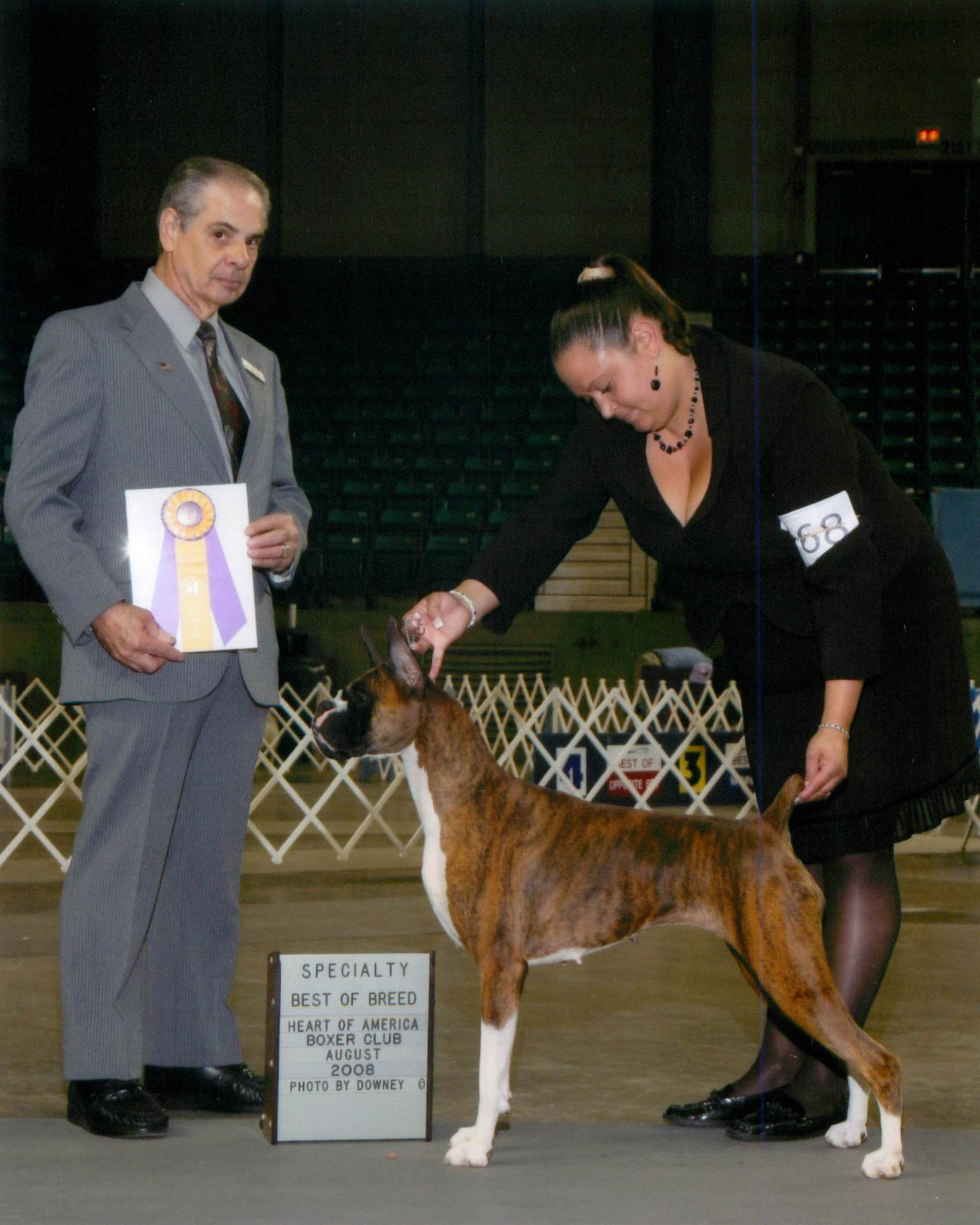 Best of Breed @ 2008 Specialty Show #2