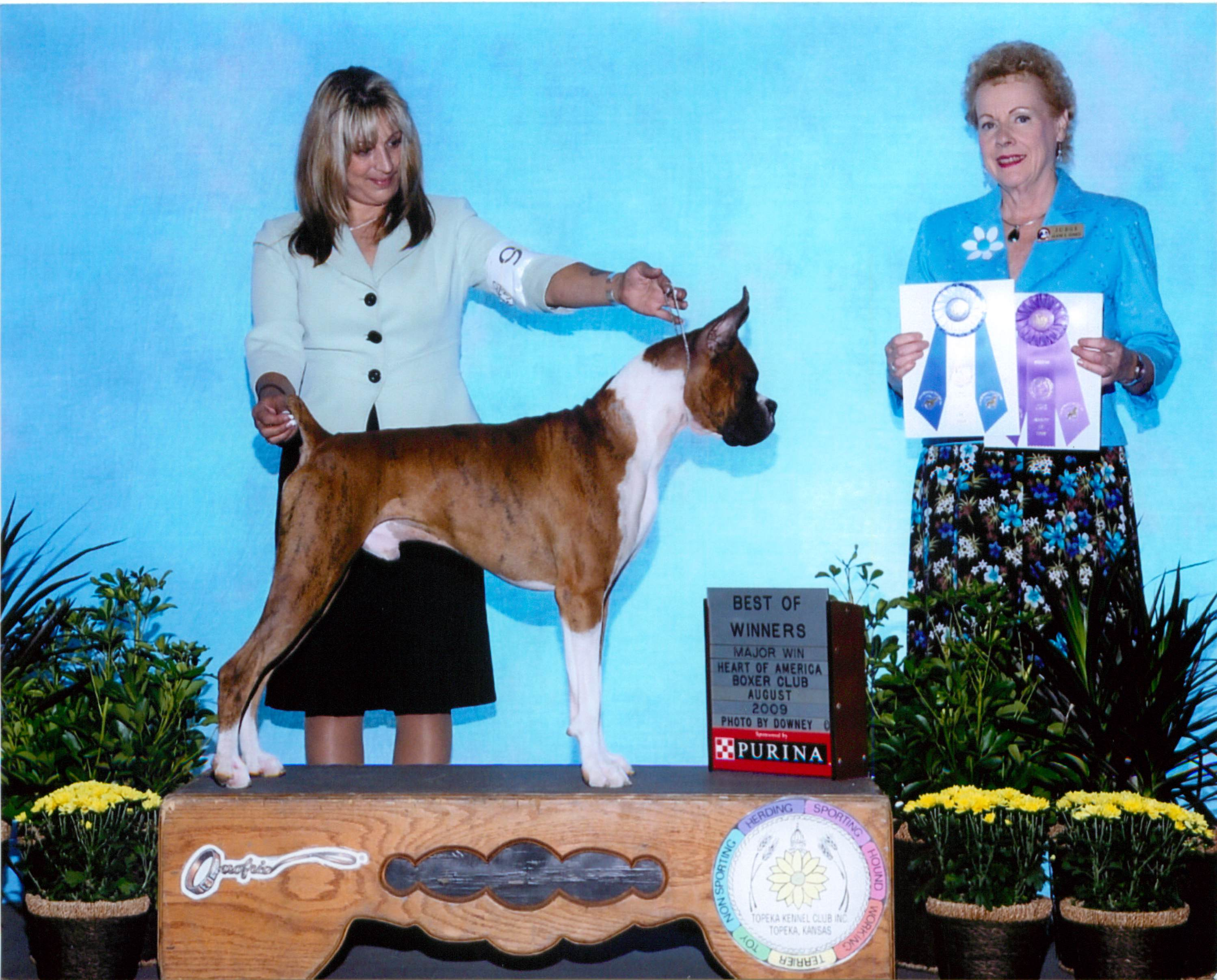Best of Winners & Winners Dog @ 2009 Specialty Show #2