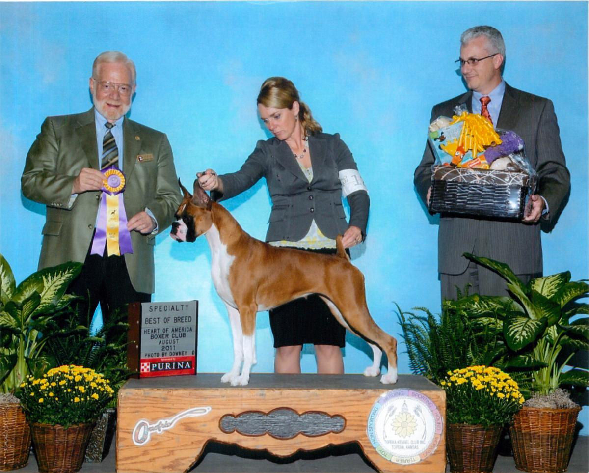 Best of Breed @ 2011 Specialty Show #2