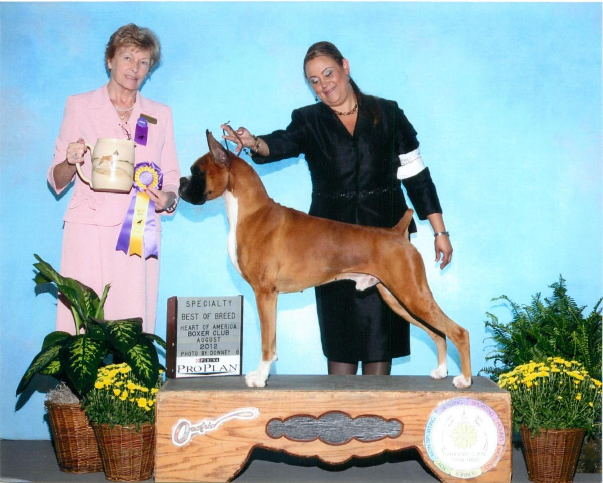 Best of Breed @ 2012 Specialty Show #1