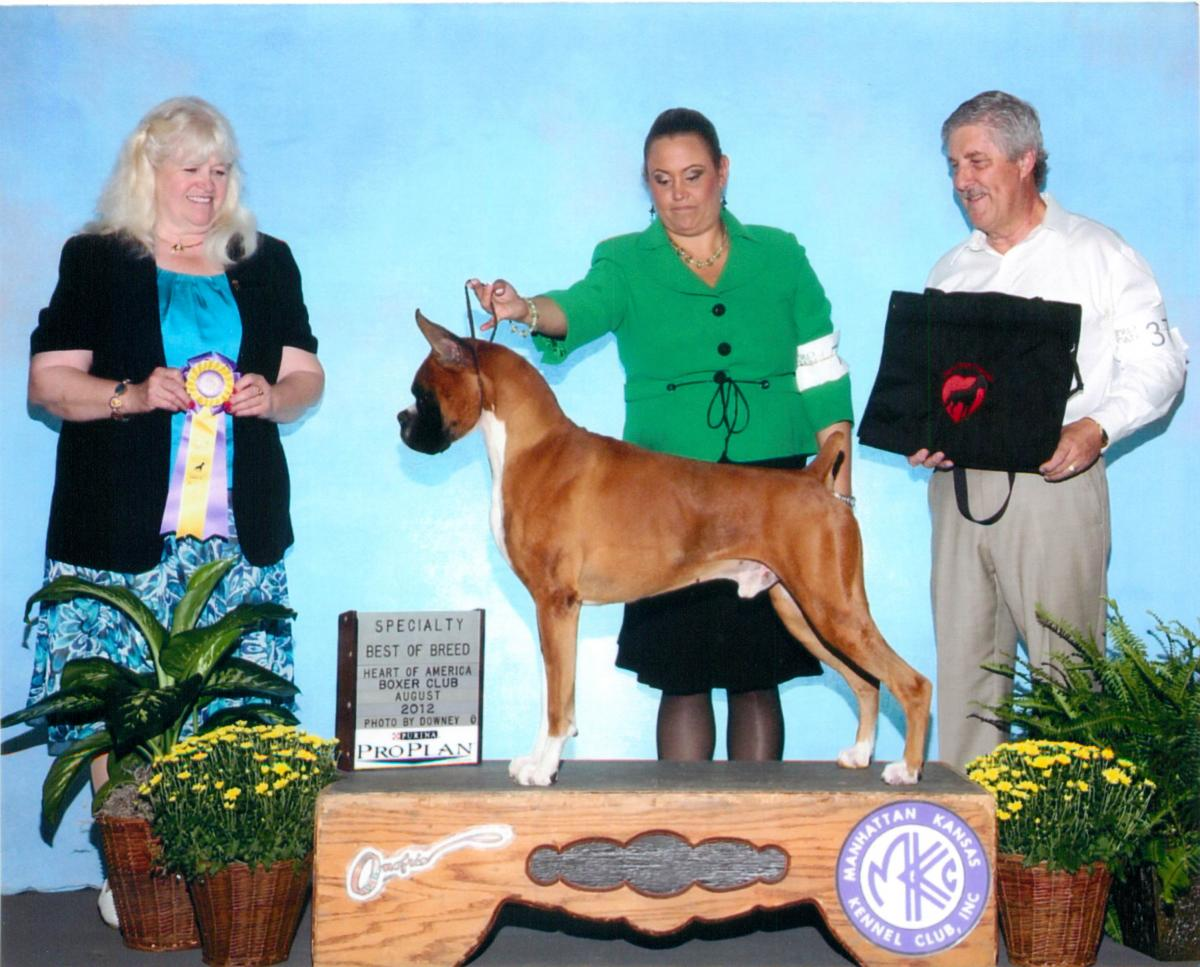 Best of Breed @ 2012 Specialty Show #2