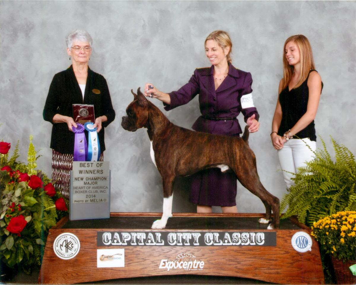 Best of Winners & Winners Dog @ 2014 Specialty Show #2