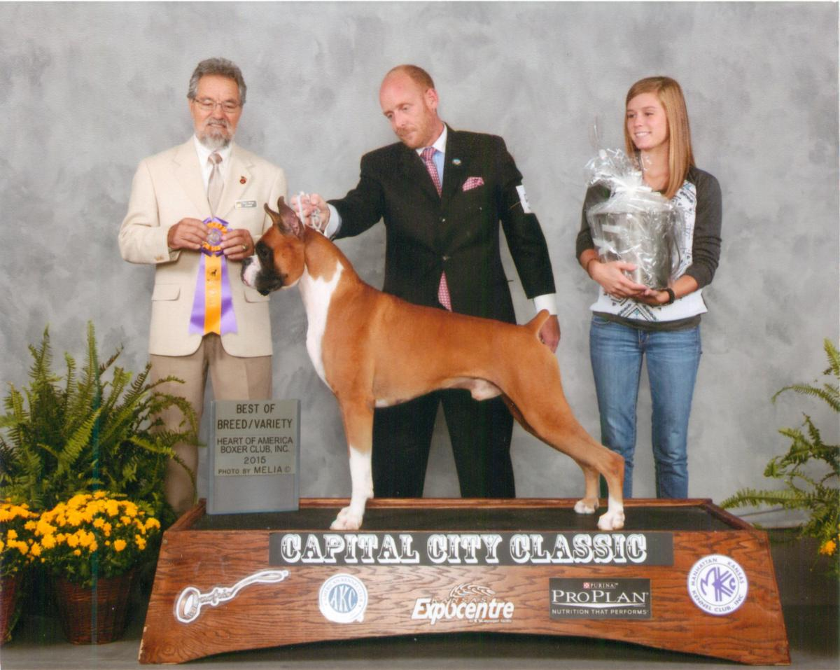 Best of Breed @ 2014 Specialty Show #1