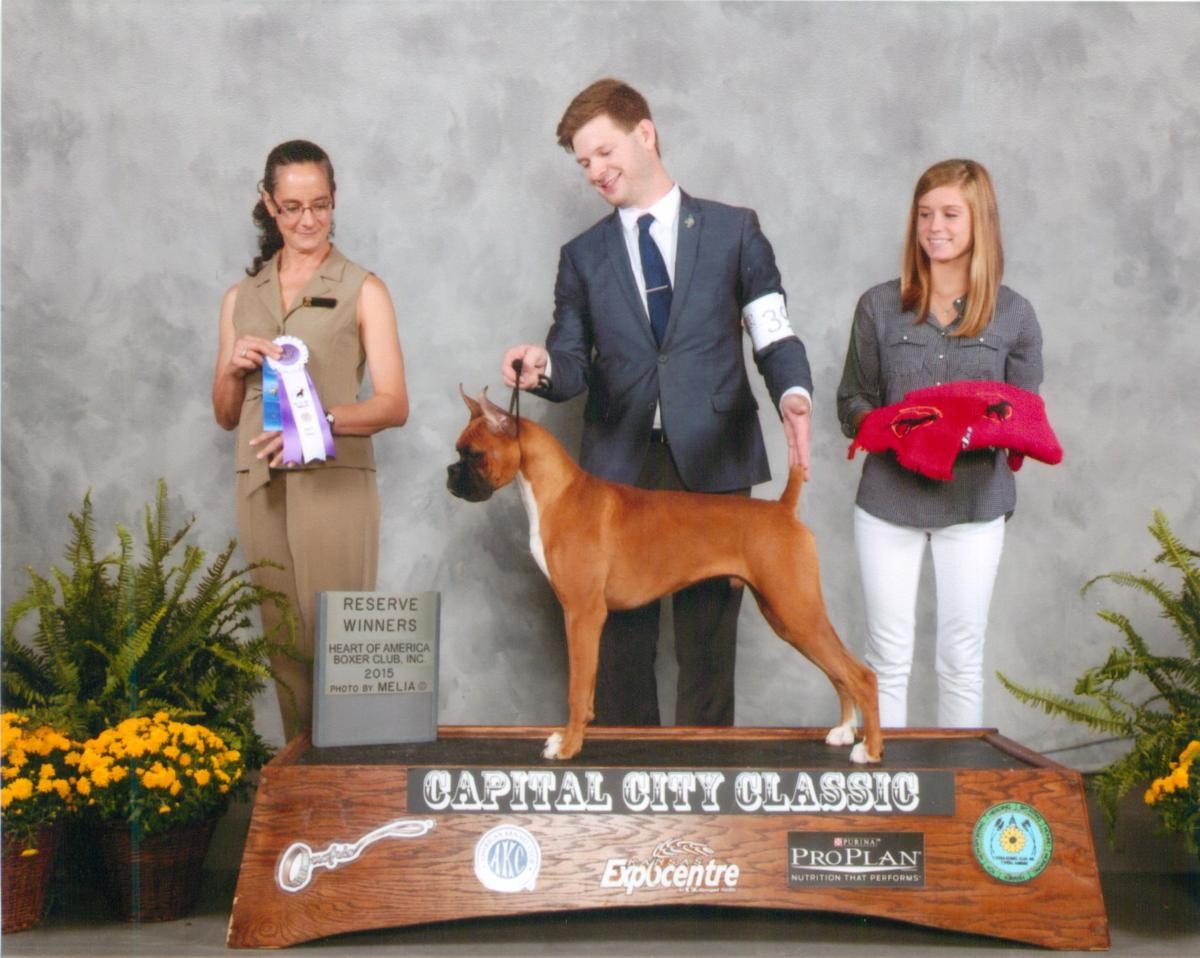 Reserve Dog @ 2015 Specialty Show #2
